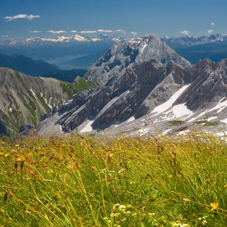 Alps flowers field on mountains background. Bavarian Alps. photo