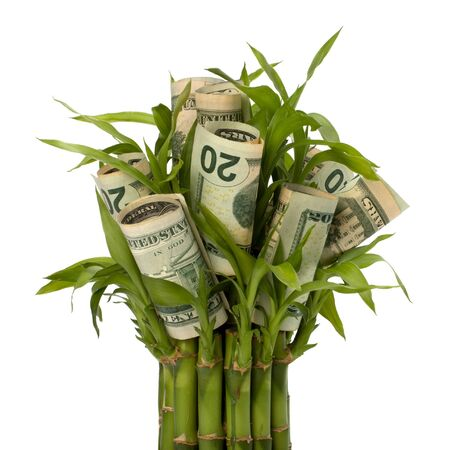 Money growing concept. Money banknotes growing  in flowerpot isolated on white background. Stock Photo - 8390120