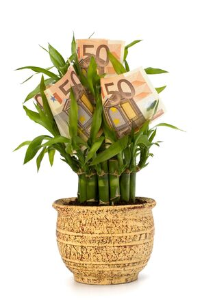 Money growing concept. Money banknotes growing  in flowerpot isolated on white background. Stock Photo - 8390400