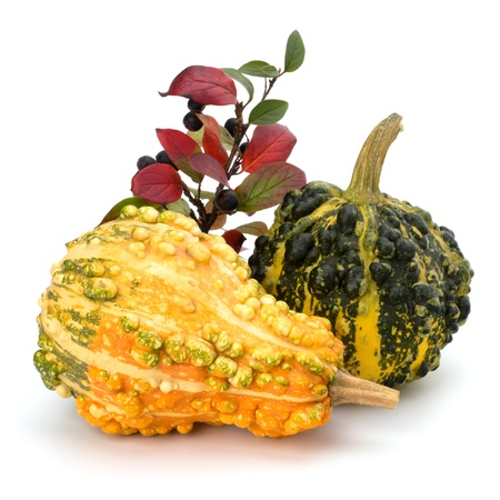 Decorative pumpkin isolated on white background. Halloween and harvest symbol. photo