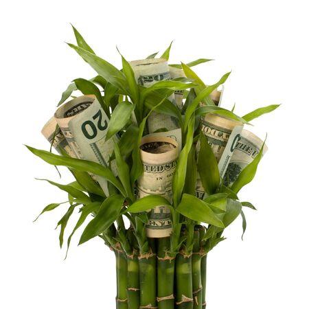 Concetto di crescente di denaro. Banconote di denaro coltivazione in vaso da fiori isolato su sfondo bianco.