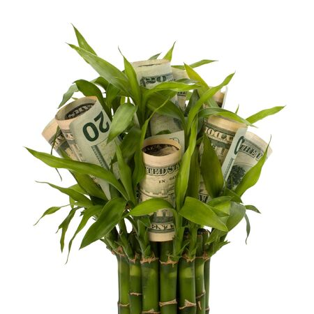Money growing concept. Money banknotes growing  in flowerpot isolated on white background. photo