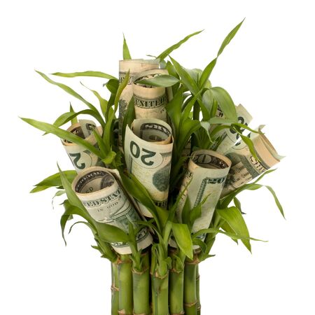 Money growing concept. Money banknotes growing  in flowerpot isolated on white background. Stock Photo - 8527198