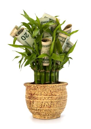 Money growing concept. Money banknotes growing  in flowerpot isolated on white background. Stock Photo - 8527505