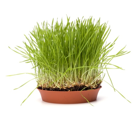 grass isolated on white background Stock Photo - 8527412
