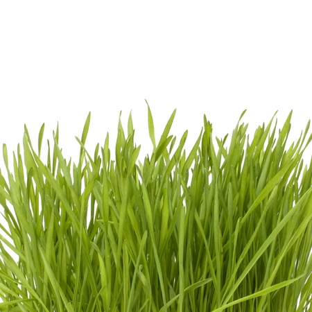 grass isolated on white background Stock Photo - 8527223