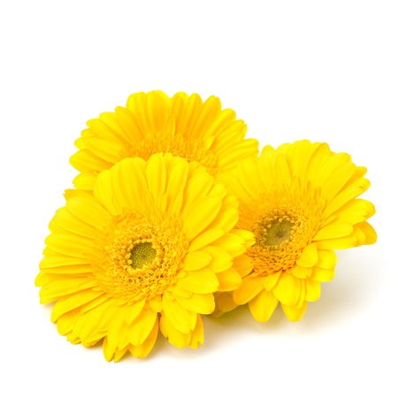yellow daisy: Beautiful daisy gerbera flowers isolated on white background