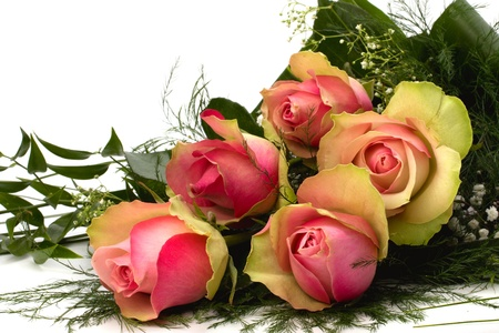 Beautiful roses Stock Photo - 9053587