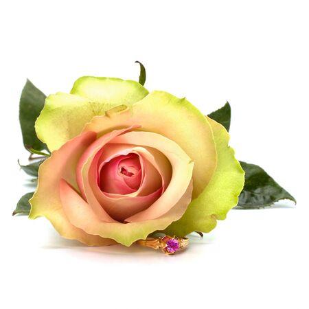 Beautiful rose with wedding ring  isolated on white background photo