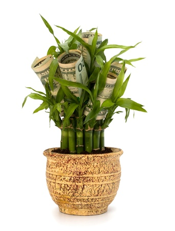 Money growing concept. Money banknotes growing  in flowerpot isolated on white background. Stock Photo - 9054002