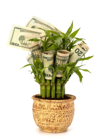 pot of money: Money growing concept. Money banknotes growing  in flowerpot isolated on white background.