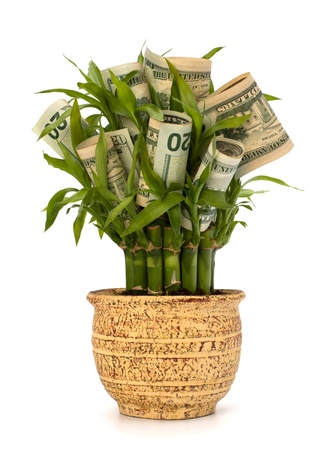 Money growing concept. Money banknotes growing  in flowerpot isolated on white background. Stock Photo - 9053927