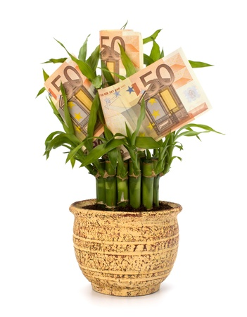 Money growing concept. Money banknotes growing  in flowerpot isolated on white background. Stock Photo - 9053955