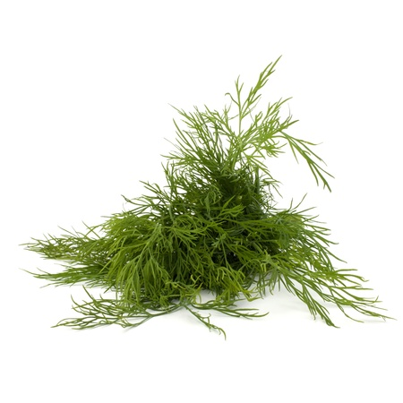 fascicle: dill isolated on white background close up