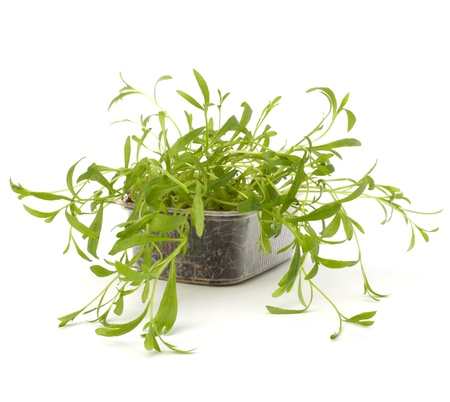 Tarragon spice isolated on white background photo