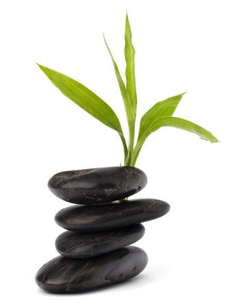 Zen pebbles balance. Spa and healthcare concept. Stock Photo - 9242956