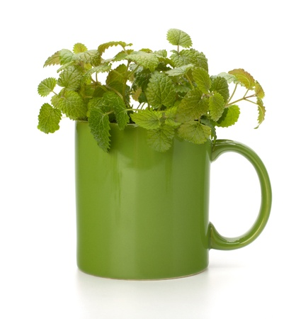 Herbal peppermint tea cup isolated on white background. Alternative medicine concept. photo