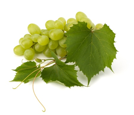 vine leaves: Ripe grape whith leaf isolated on white background
