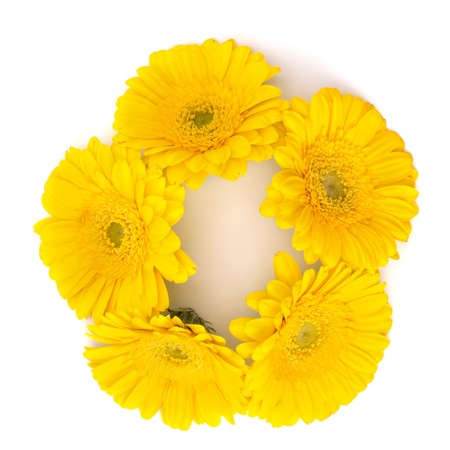 Beautiful daisy gerbera flowers isolated on white background Stock Photo - 13192372