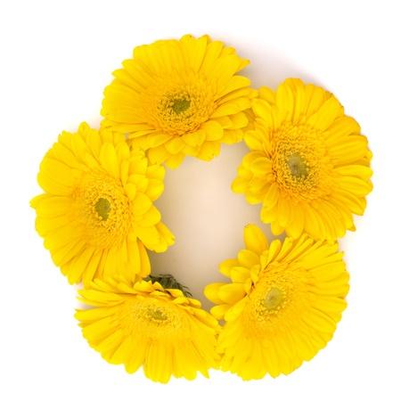 Beautiful daisy gerbera flowers isolated on white background Stock Photo - 13192372
