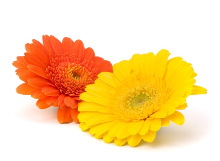 Beautiful daisy gerbera flowers isolated on white background Stock Photo - 13297013