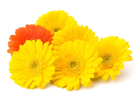 Beautiful daisy gerbera flowers isolated on white background Stock Photo - 13297526