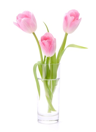 glass vase: Pink tulips bouquet in vase isolated on white background