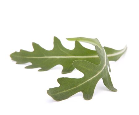 Sweet rucola salad or rocket lettuce leaves isolated on white background Stock Photo - 13293381