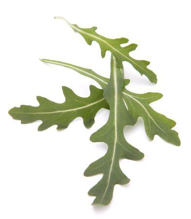 Sweet rucola salad or rocket lettuce leaves isolated on white background Stock Photo - 13295557