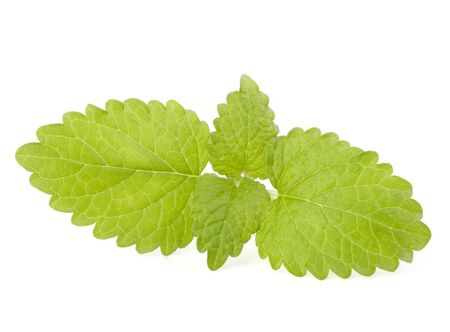 Peppermint or  mint isolated on white background Stock Photo - 13332432