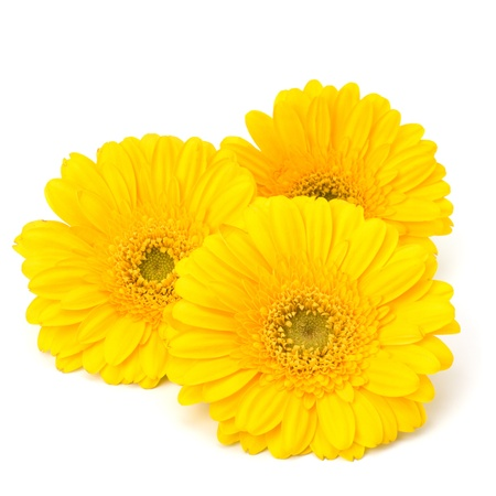 Beautiful daisy gerbera flowers isolated on white background Stock Photo - 13332484