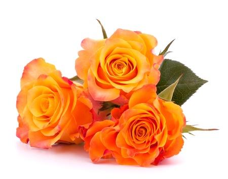rosas naranjas: Tres rosas naranjas aislados en fondo blanco corte