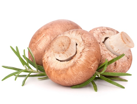 Brown champignon mushroom and rosemary leaves isolated on white background cutout Stock Photo - 14016340