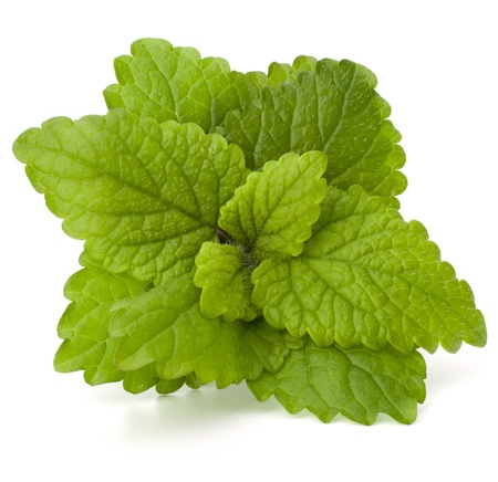 Peppermint or  mint bunch isolated on white background cutout photo