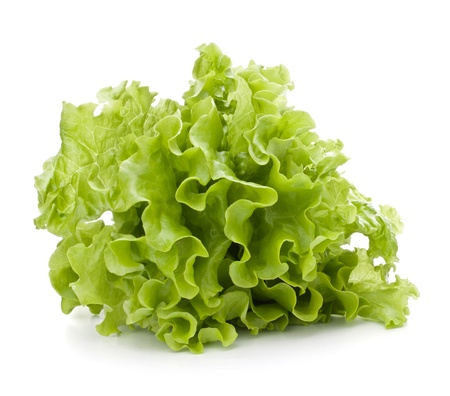 Fresh lettuce salad leaves bunch isolated on white background cutout