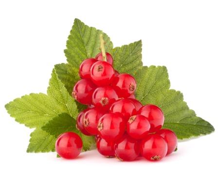 スグリ赤と緑の葉の静物画白い背景素材上に分離されて