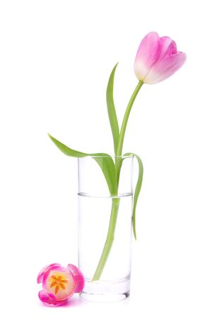 matherday: Pink tulip  in vase isolated on white background Stock Photo