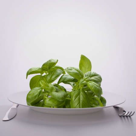 Sweet basil leaves on plate. Raw food diet concept. Stock Photo - 16473932