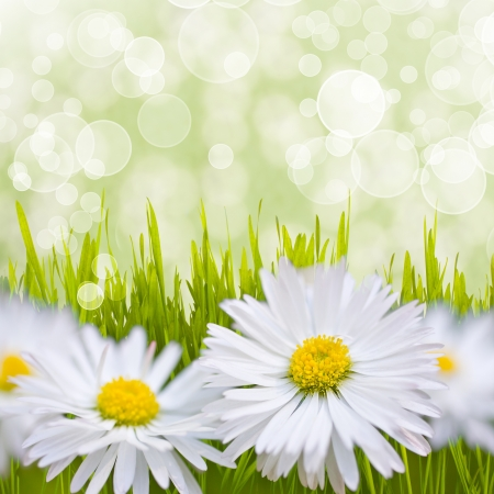 Spring daisy field. Easter card background. photo