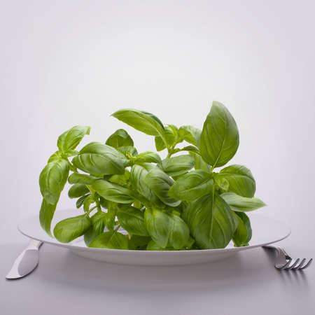 Sweet basil leaves on plate. Raw food diet concept. photo