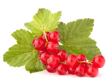 Red currants and green leaves still life isolated on white background cutout photo