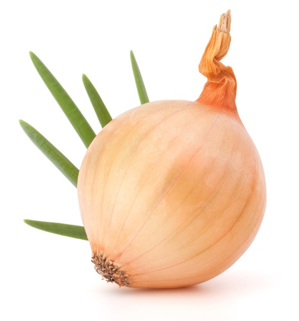 Onion bulb on white background cutout photo