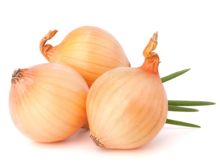 Onion vegetable still life on white background cutout photo