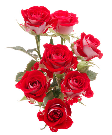 Red rose flower bouquet isolated on white background cutout Banco de Imagens