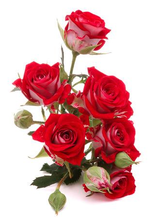 Rode roos boeket bloemen op een witte achtergrond knipsel Stockfoto