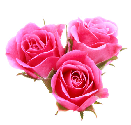Pink rose flower bouquet isolated on white background cutout photo