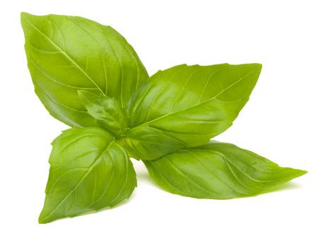Zoete basilicum bladeren geà ¯ soleerd op witte achtergrond Stockfoto