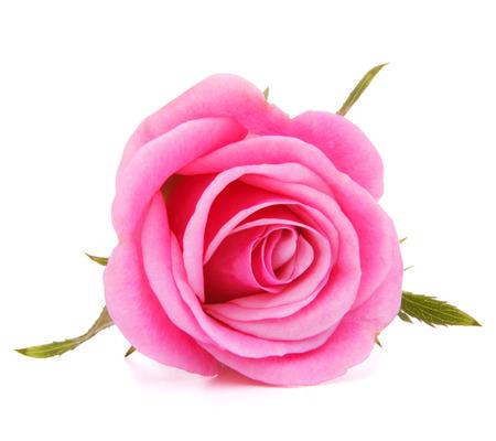 Roze roze bloem hoofd op een witte achtergrond knipsel Stockfoto