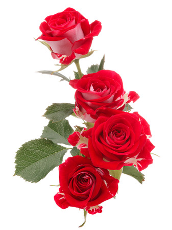 Red rose flower bouquet isolated on white background cutout Stock Photo