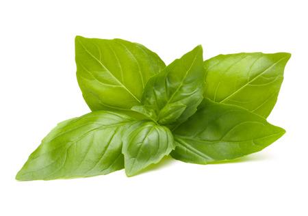 스위트 바질 잎 흰색 배경에 고립 스톡 콘텐츠